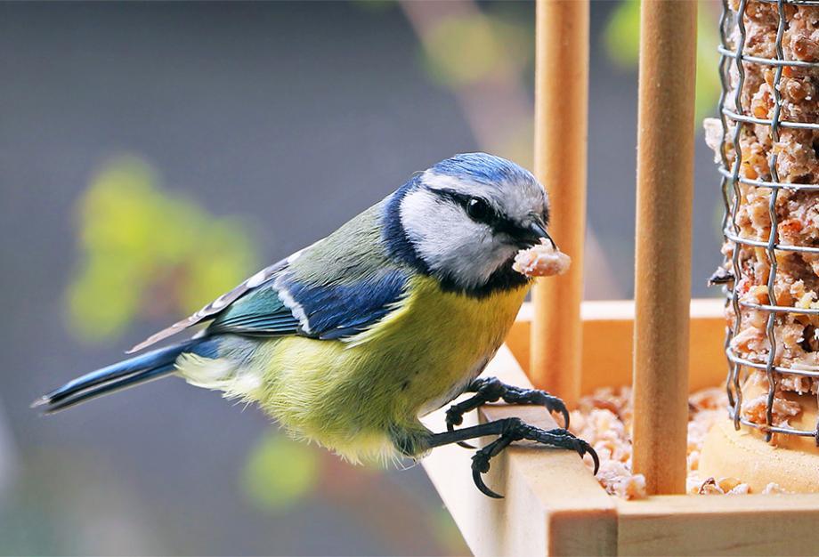 mangeoire oiseaux DIY