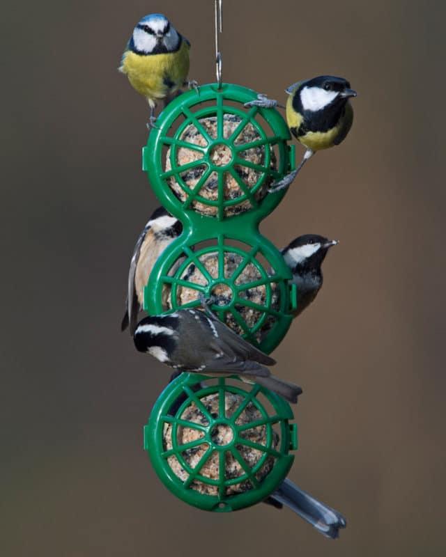 oiseaux boules de graisses