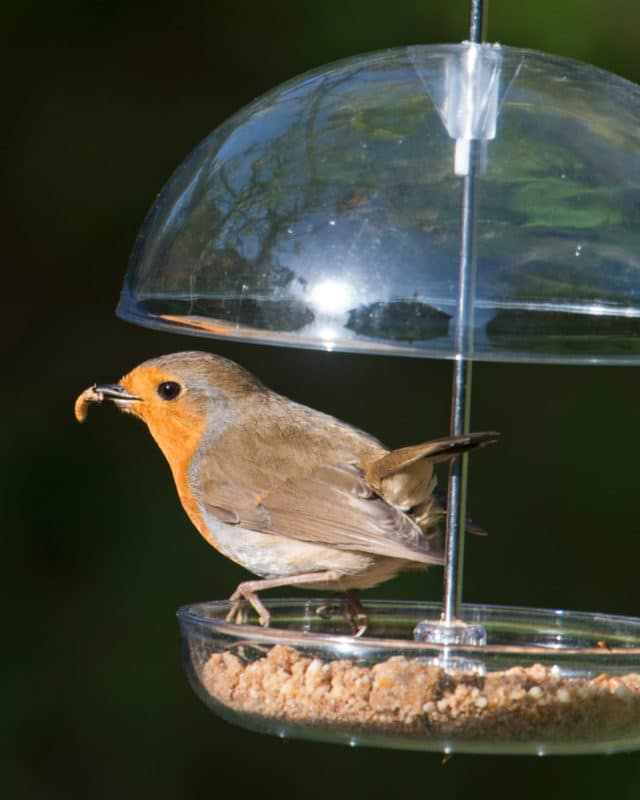 mangeoire i love robins pearl