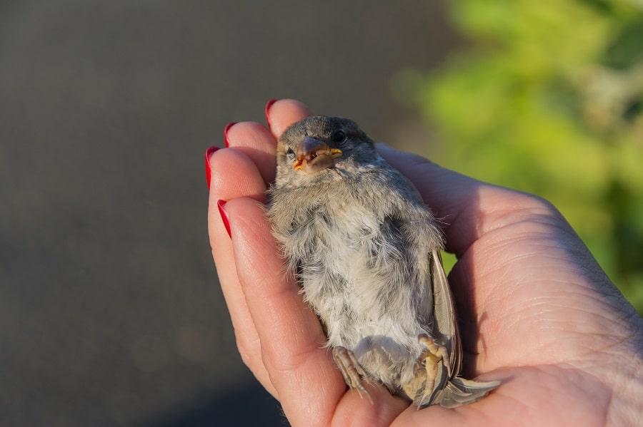 sos oiseau blessé