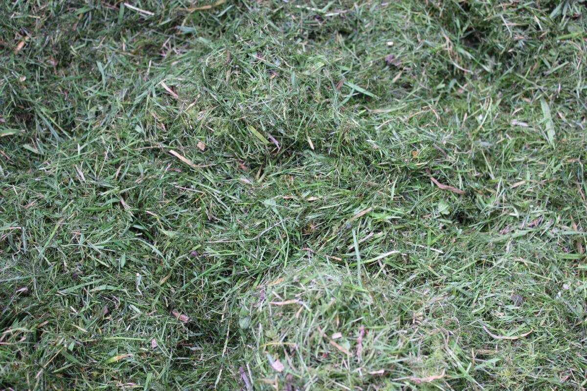paillis herbe coupée