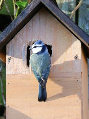 nichoir oiseaux bois