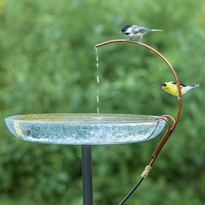 abreuvoir à oiseaux