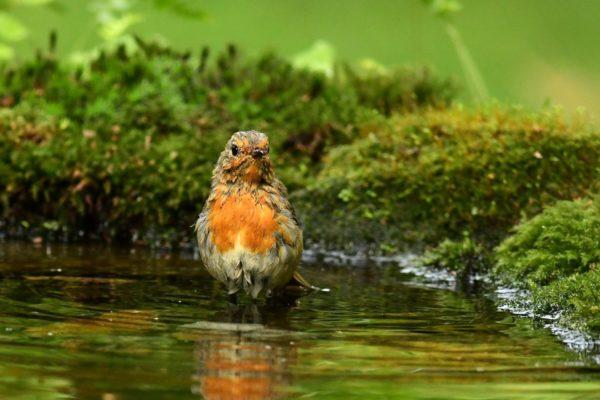 donner a boire aux oiseaux durant l'été