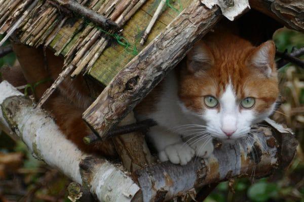 chat dans une mangeoire oiseaux