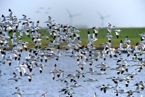 migration d'oiseau