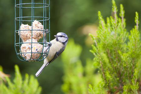 les oiseaux du jardin avec hello bridé