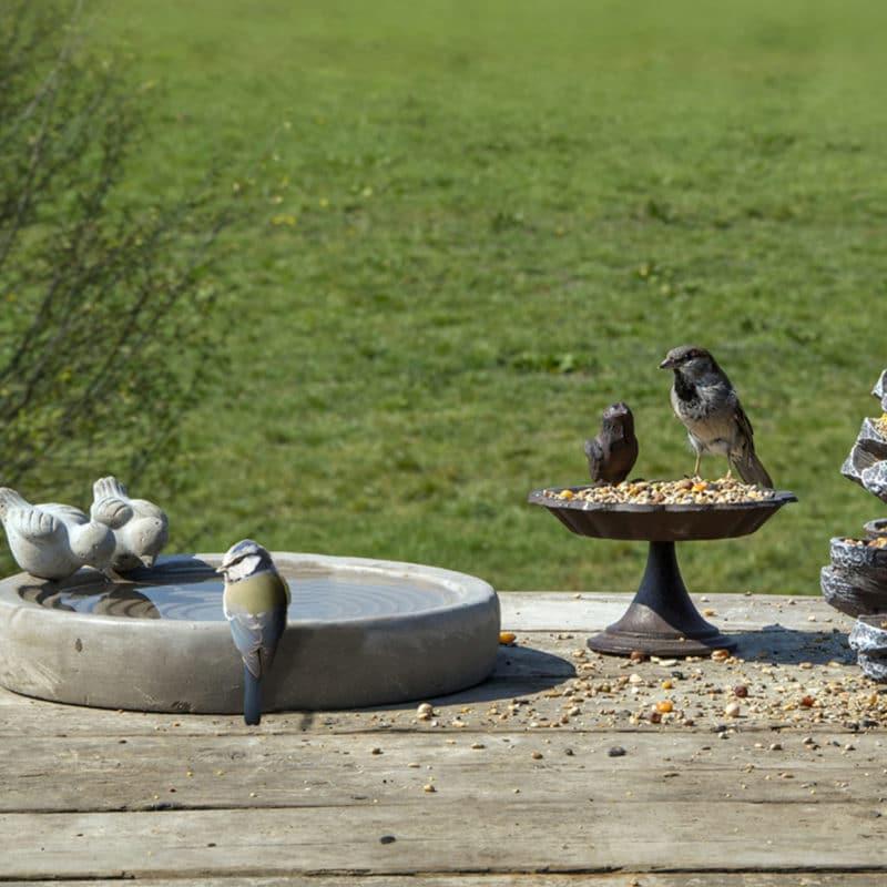 bain oiseaux